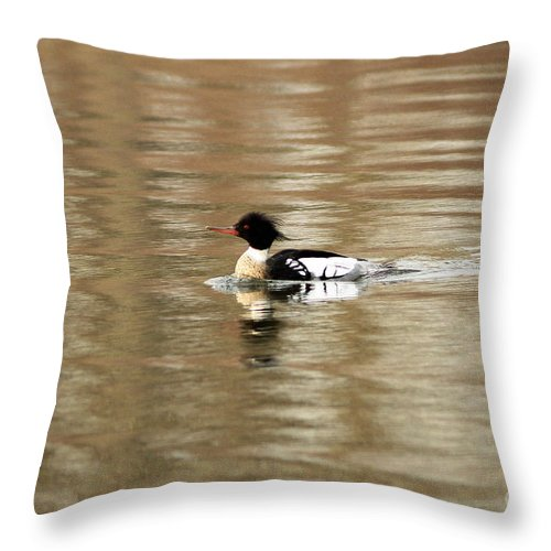 Male Red Breasted Merganser At Sunrise Throw Pillow featuring the photograph Male Red Breasted Merganser At Sunrise by Inspired Nature Photography Fine Art Photography