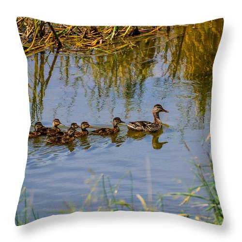 South Dakota Throw Pillow featuring the photograph Mallard Hen And Ducklings by M Dale