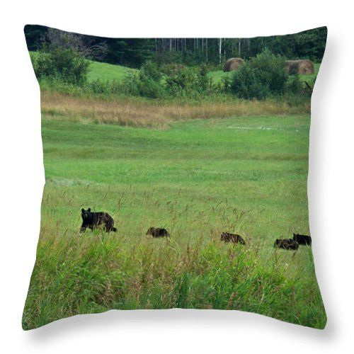 Animals Throw Pillow featuring the photograph Mama Bear And 4 Cubs by Mary Lee Dereske