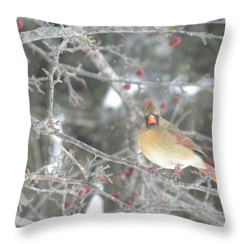 Female Cardinal Throw Pillow featuring the photograph Mama Cardinal by Peggy McDonald
