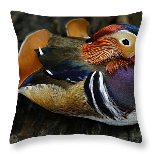 Disney World Throw Pillow featuring the photograph Mandarin Duck by Bill Dodsworth