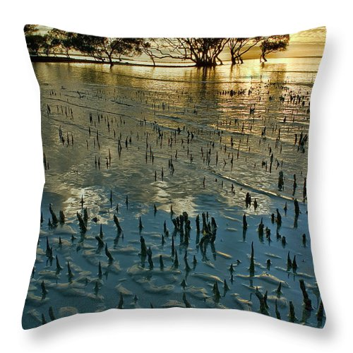 2010 Throw Pillow featuring the photograph Mangroves by Robert Charity