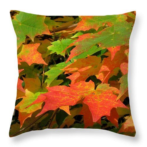 Nature Throw Pillow featuring the photograph Maple Blaze by Charles Ford