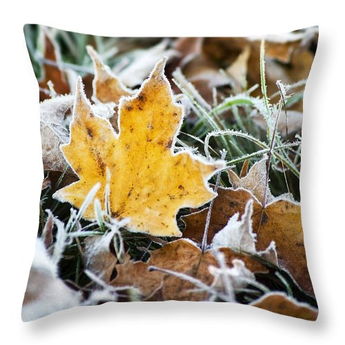 Frost Throw Pillow featuring the photograph Maple Frost Leaf Art by Christina Rollo