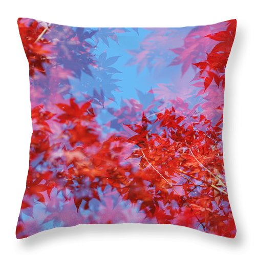 Leaf Throw Pillow featuring the photograph Maple Leaves by Catherine Lau