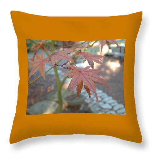 Tree Throw Pillow featuring the photograph Maple Leaves by Lorna Hooper