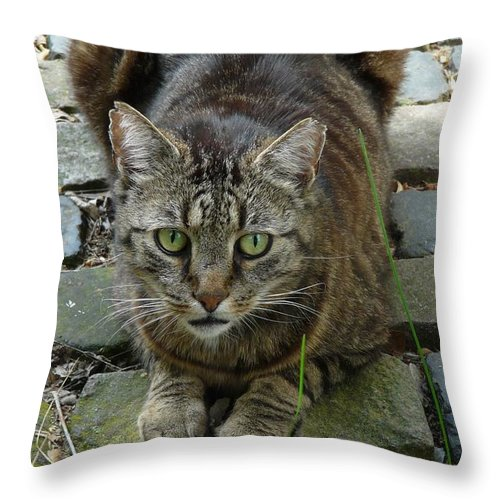 Cat Throw Pillow featuring the photograph Marco by Valerie Ornstein