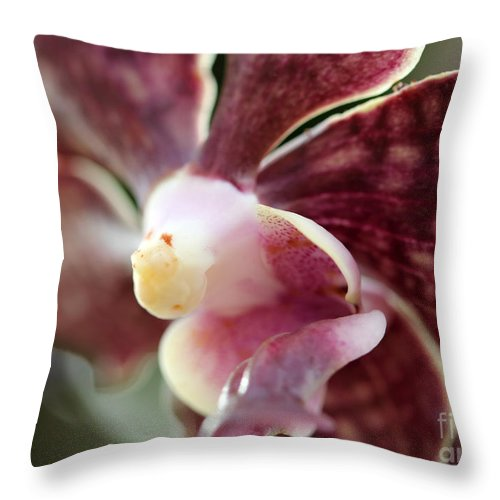 Flowers Throw Pillow featuring the photograph Maroon And White Orchid by Mary Haber