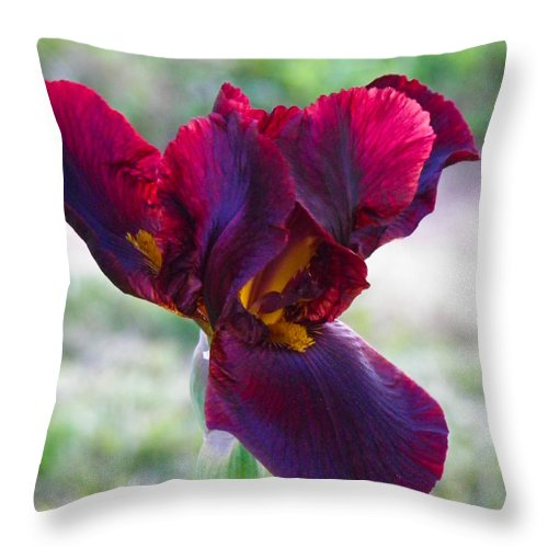 Iris Throw Pillow featuring the photograph Maroon Iris by Nick Kirby
