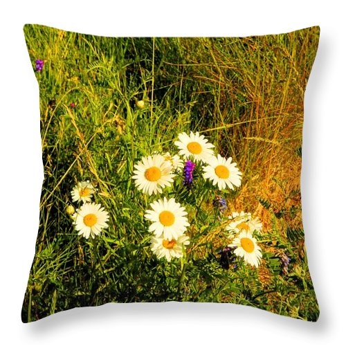 Marshall Point Throw Pillow featuring the photograph Marshall Point Daisies by Robert McCulloch