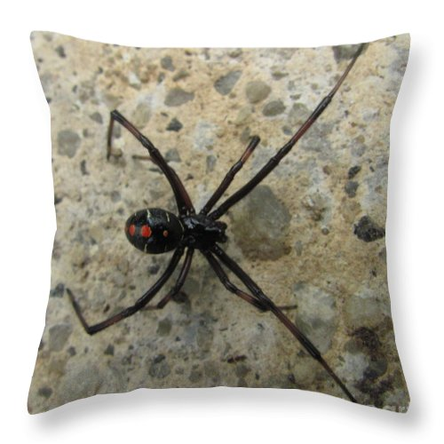 Maryland Black Widow Spider Images Photograph Prints Venomous Spider Images Deadly Spider Photograph Prints Poisonous Spider Prints Critter Prints Killer Spider Prints Throw Pillow featuring the photograph Maryland Black Widow by Joshua Bales