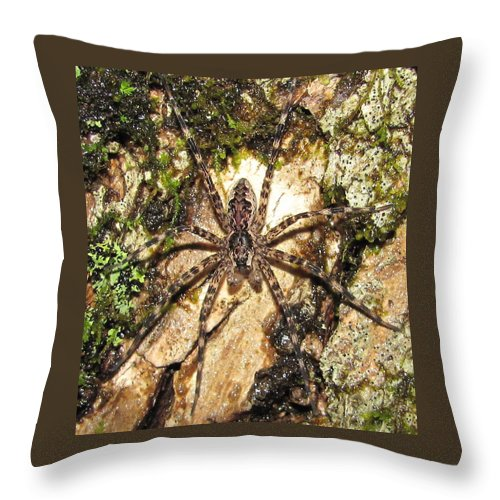 Maryland Brown Fishing Spider Images Hunting Spider Images Maryland Arachnid Images Maryland Spider Photograph Prints Spider On Lichens And Moss Images Purple And Brown Spider Pictures Entomology Forest Ecology Oldgrowth Forest Biodiversity Nature Throw Pillow featuring the photograph Brown Fishing Spider by Joshua Bales