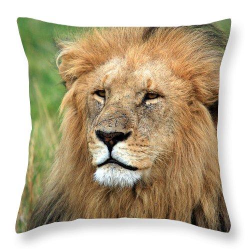 Lion Throw Pillow featuring the photograph Masai Mara Lion Portrait  by Aidan Moran