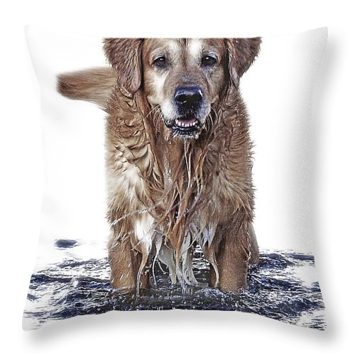 Dog Throw Pillow featuring the photograph Master Of Wet Elements by Joachim G Pinkawa