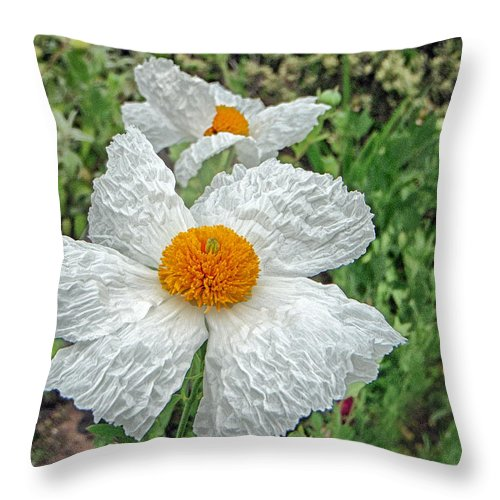 Poppy Throw Pillow featuring the photograph Matalija Poppy by Marianne Donahoe