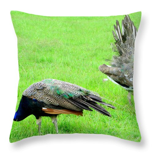 Peacock Throw Pillow featuring the photograph Mating Ritual by Randall Weidner