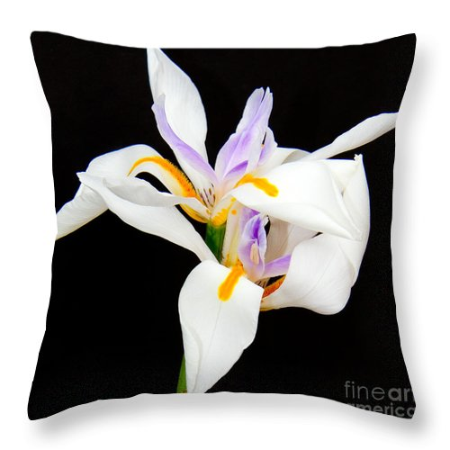 Lilies Throw Pillow featuring the photograph Maui Lilies On Black II by Jim Cazel