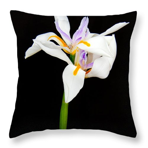 Lilies Throw Pillow featuring the photograph Maui Lilies On Black by Jim Cazel
