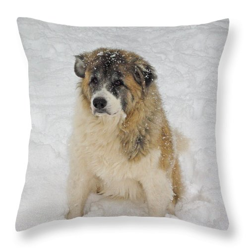 Dog Throw Pillow featuring the photograph Maverick - Snow Dog by Robyn Stacey