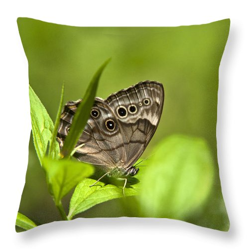 Northern Throw Pillow featuring the photograph Meadow Butterfly by Christina Rollo