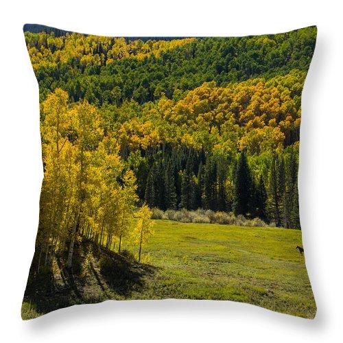 Colorado Photographs Throw Pillow featuring the photograph Medowland by Gary Benson