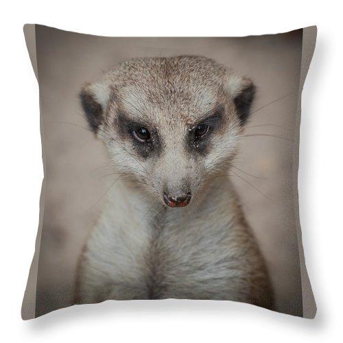 Meerkat Throw Pillow featuring the photograph Meerkat Stare-down by Shirley Radabaugh