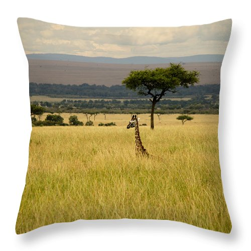 Giraffes Throw Pillow featuring the photograph Meeting Of The Minds by Amy Warr