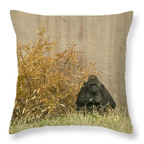 Primate Throw Pillow featuring the photograph Melancholy by Trish Tritz