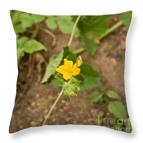 Melon Throw Pillow featuring the photograph Melon Flower by Leyla Ismet