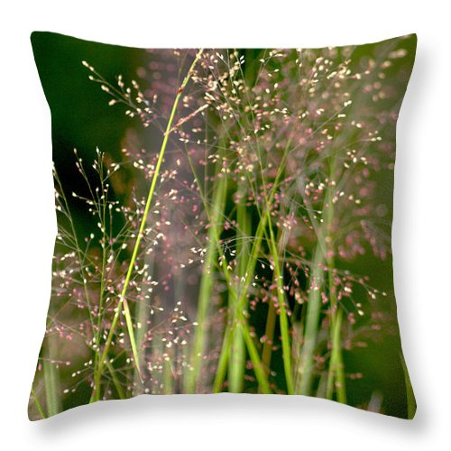 Floral Throw Pillow featuring the photograph Memories Of Springtime by Holly Kempe