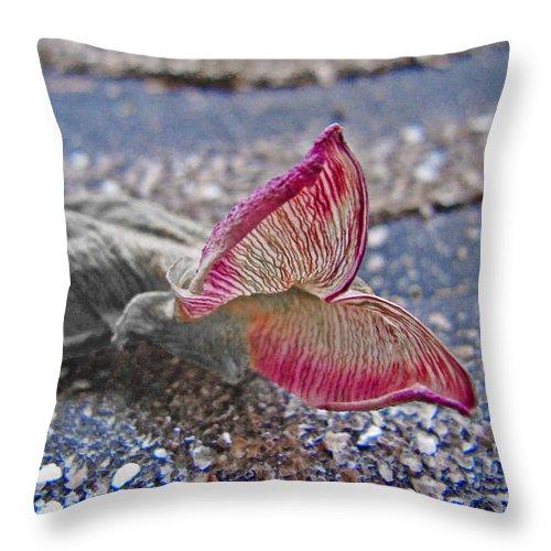 Butterfly Throw Pillow featuring the photograph Metamorphosis by Casper Cammeraat