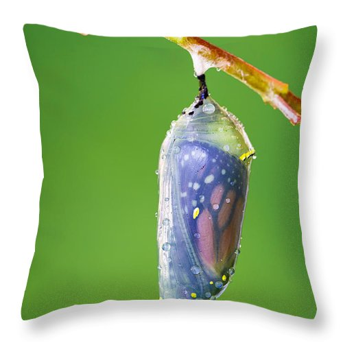 Monarch Butterfly Chrysalis Throw Pillow featuring the photograph Metamorphosis by Dawna Moore Photography
