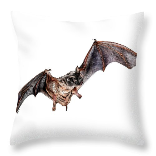 Illustration Throw Pillow featuring the photograph Mexican Free-tailed Bat by Roger Hall