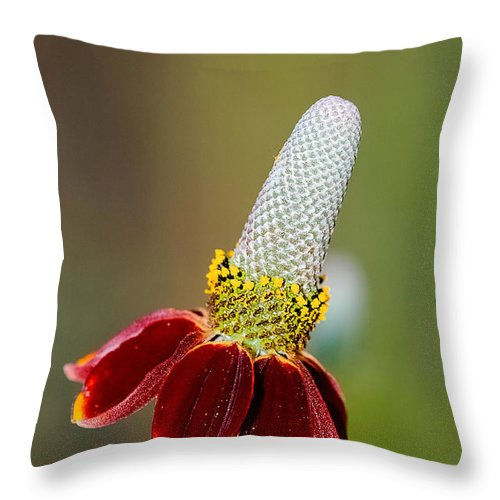 Bloom Throw Pillow featuring the photograph Mexican Hat by Don and Bonnie Fink