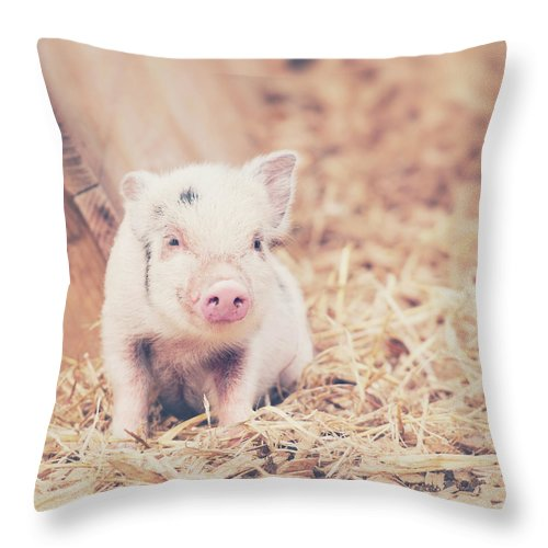 Pig Throw Pillow featuring the photograph Micro Pig by Samantha Nicol Art Photography