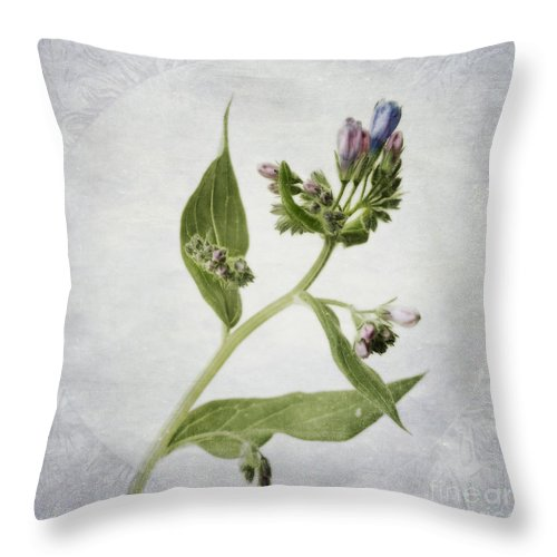 Tall Lungwort Throw Pillow featuring the photograph Mid Summer Scent by Priska Wettstein