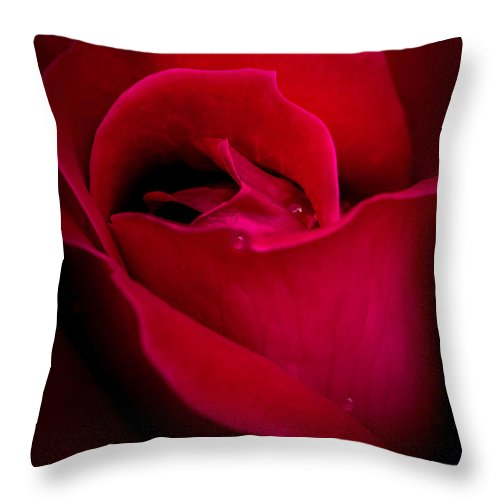 Midnight Rose Throw Pillow featuring the photograph Midnight Rose by Michael Arend