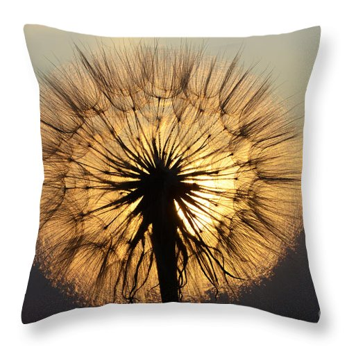 Milkweed Throw Pillow featuring the photograph Beauty Of The Dandelion 2 by Bob Christopher