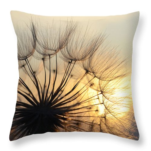 Sunset Throw Pillow featuring the photograph Milkweed 2 by Bob Christopher