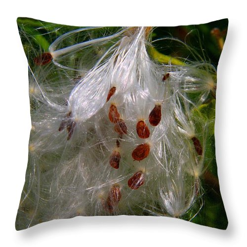 Milkweed Throw Pillow featuring the photograph Milkweed Seeds by Kathryn Meyer