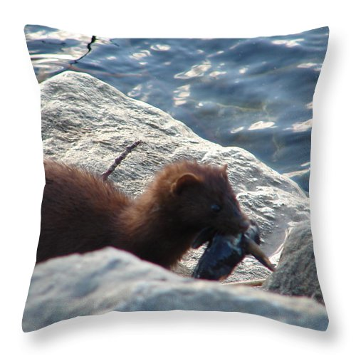 American Mink Throw Pillow featuring the photograph Mink with a Round Goby by Randy J Heath