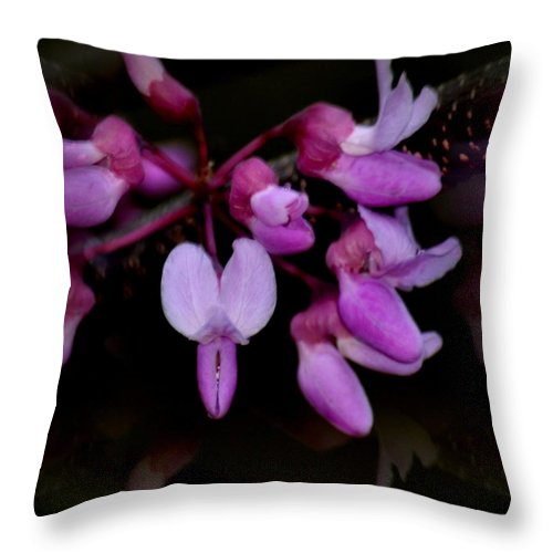 Mirrored Redbuds Throw Pillow featuring the photograph Mirrored Redbuds by Maria Urso