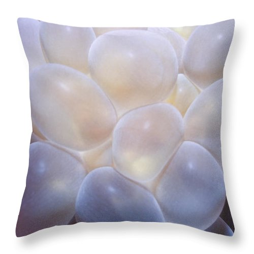 Micronesia Throw Pillow featuring the photograph Miscellaneous 6 by Dawn Eshelman