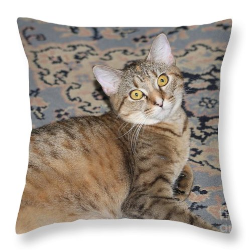 Cat Throw Pillow featuring the photograph Miss. Gretchen by Michelle Powell