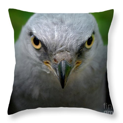 Mississippi Throw Pillow featuring the photograph Mississippi Kite Stare by Liz Masoner