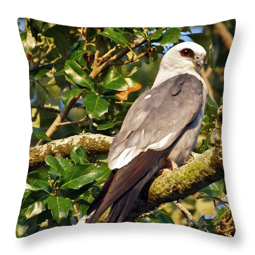New Orleans Throw Pillow featuring the photograph Mississippi Kite by William Morgan