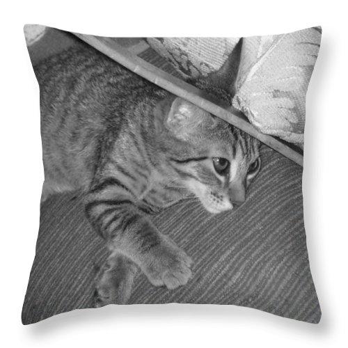 Kitten Throw Pillow featuring the photograph Model Kitten by Pharris Art