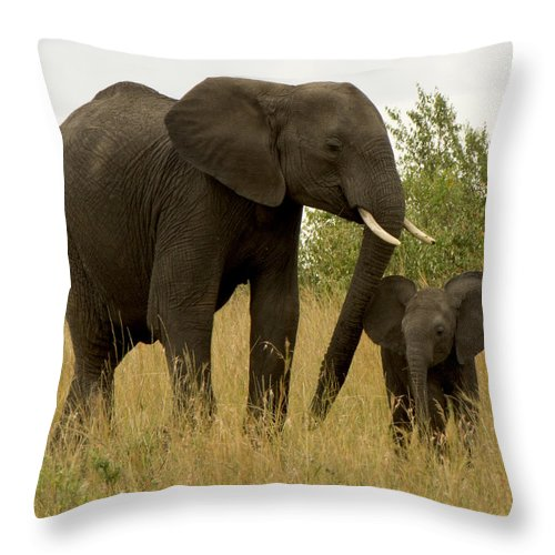 Elephants Throw Pillow featuring the photograph Mom And Little by Amy Warr