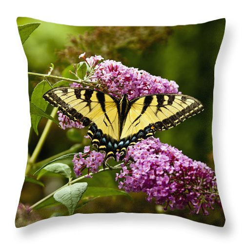 Butterfly Throw Pillow featuring the photograph Monarch Butterfly 2 by Dennis Coates