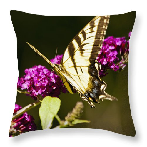 Butterfly Throw Pillow featuring the photograph Monarch Butterfly 5 by Dennis Coates